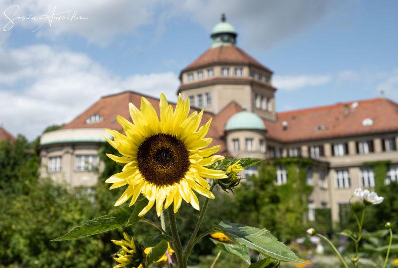 Jardin botanique de Munich © Sonia Aumiller