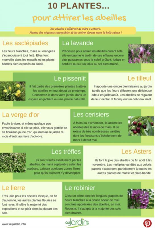 © Aujardin.info - 10 plantes pour attirer les abeilles toute l'année