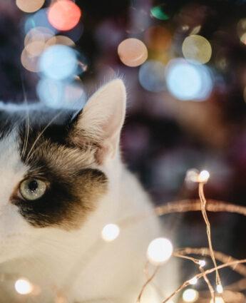 Chat et lumières de scène